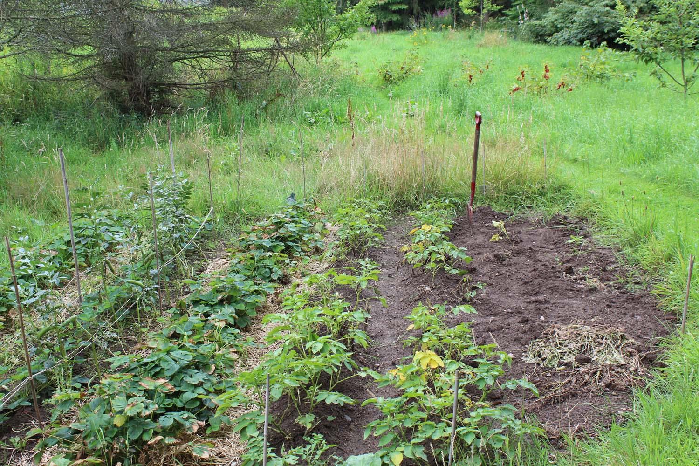 En køkkenhave hvor man kan dyrke bær og grøntsager.