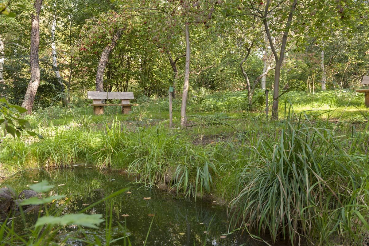 En bænk midt i skoven, hvor der er mange forskellige planter.