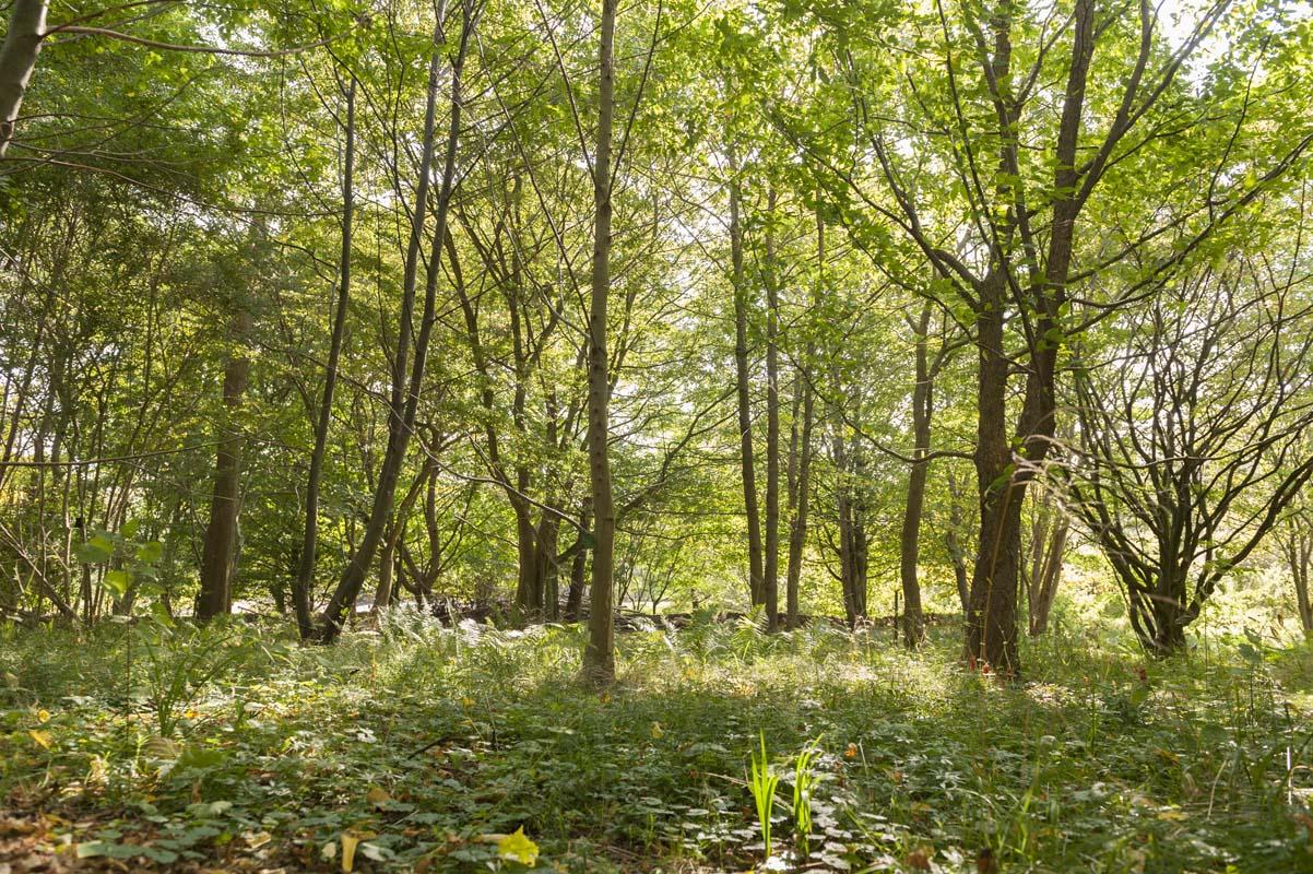 En rumlig skov med mange træer.