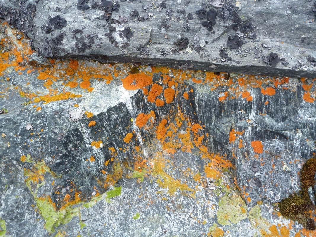Naturens organge og grå farver har været inspiration til, hvilke farver selve gangbroen har fået.