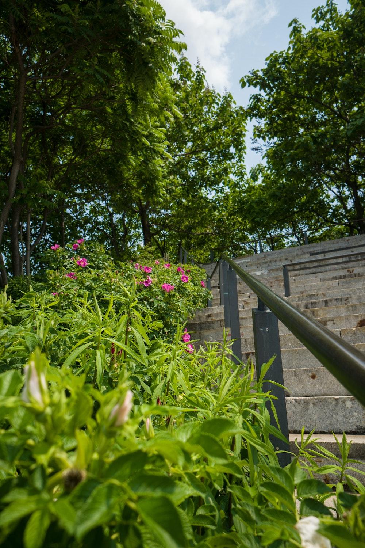 Billede af blomstrende busk langs med trappe og gelænder