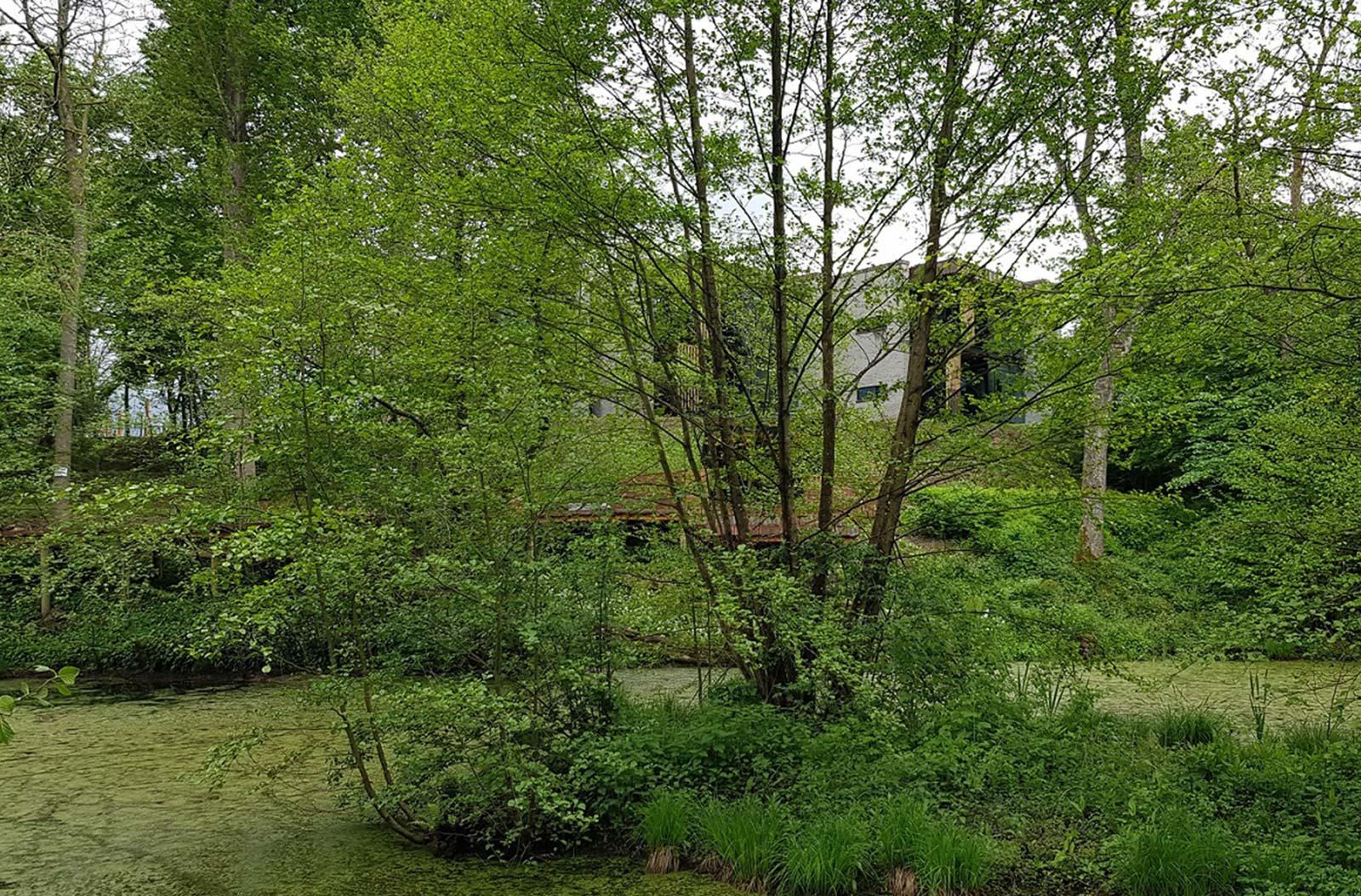 En skov med grønne træer og en sø, hvor man kan ane en hospicet i baggrunden