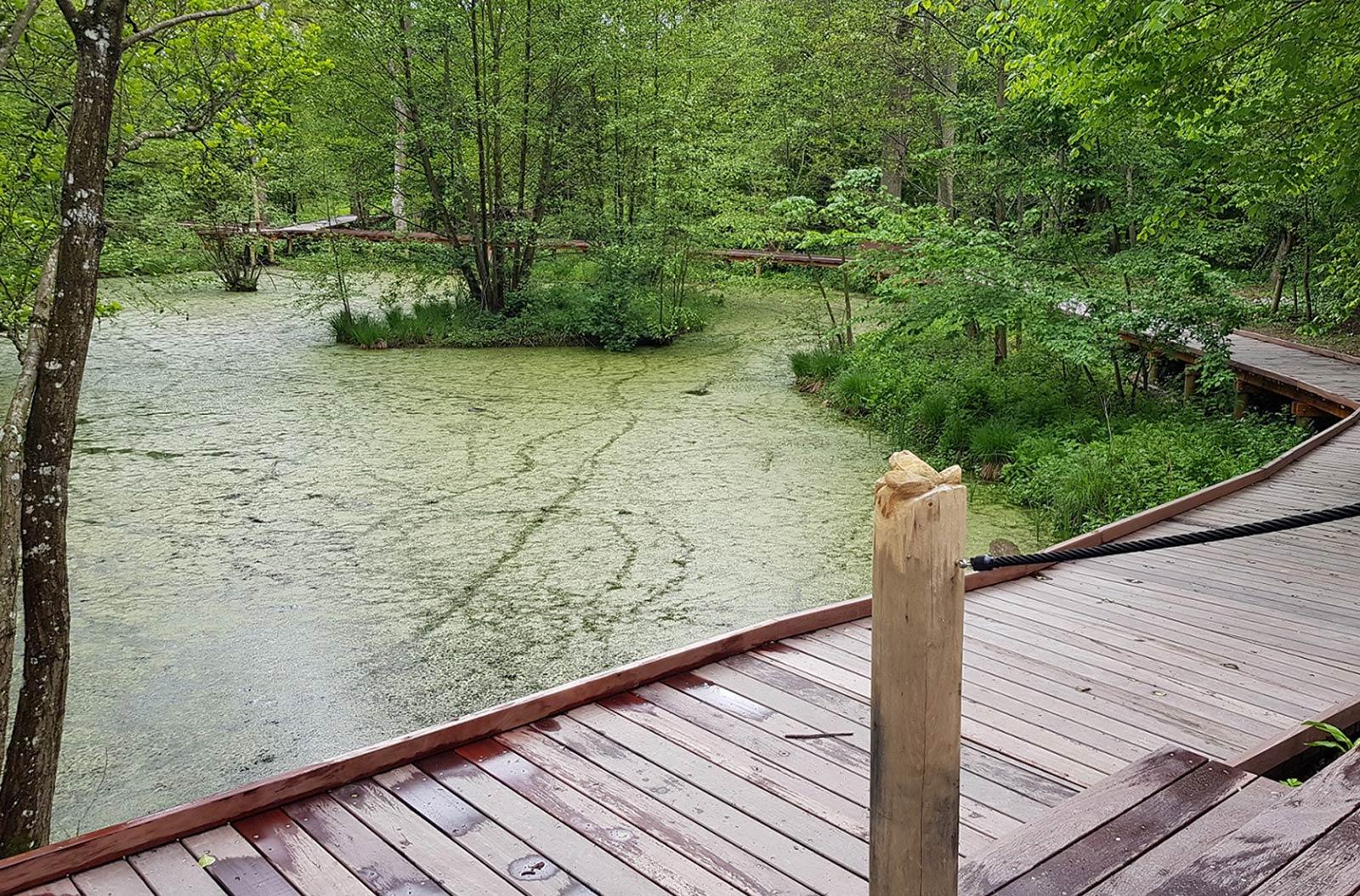 En boardwalk med gelænder ved trappen der løber rundt om en sø i en skov