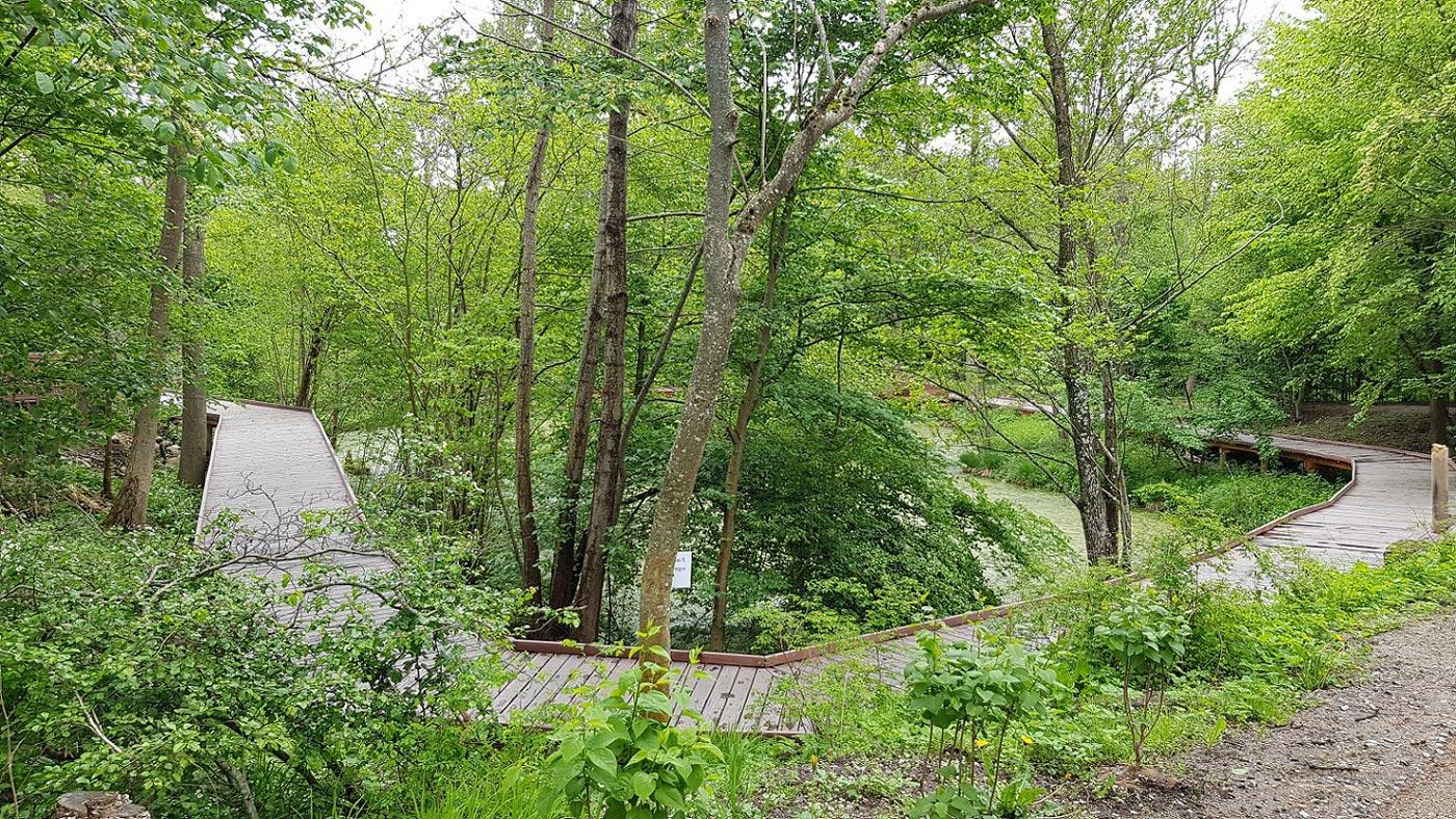 Boardwalk i træ der snor sig gennem en skov