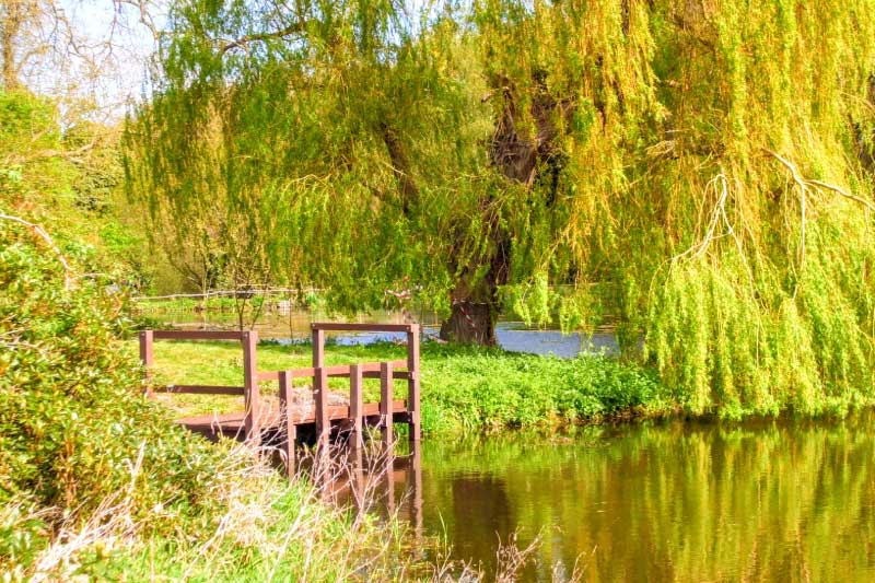 pond dipping platforms at swallowtails