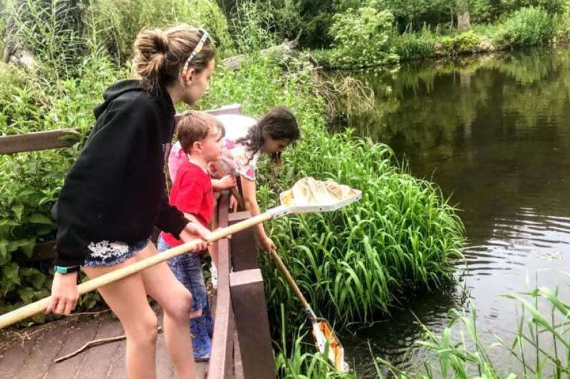 children pond dipping at swallowtails