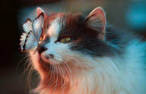 a cat with a butterfly on her nose. guess what's happening next.