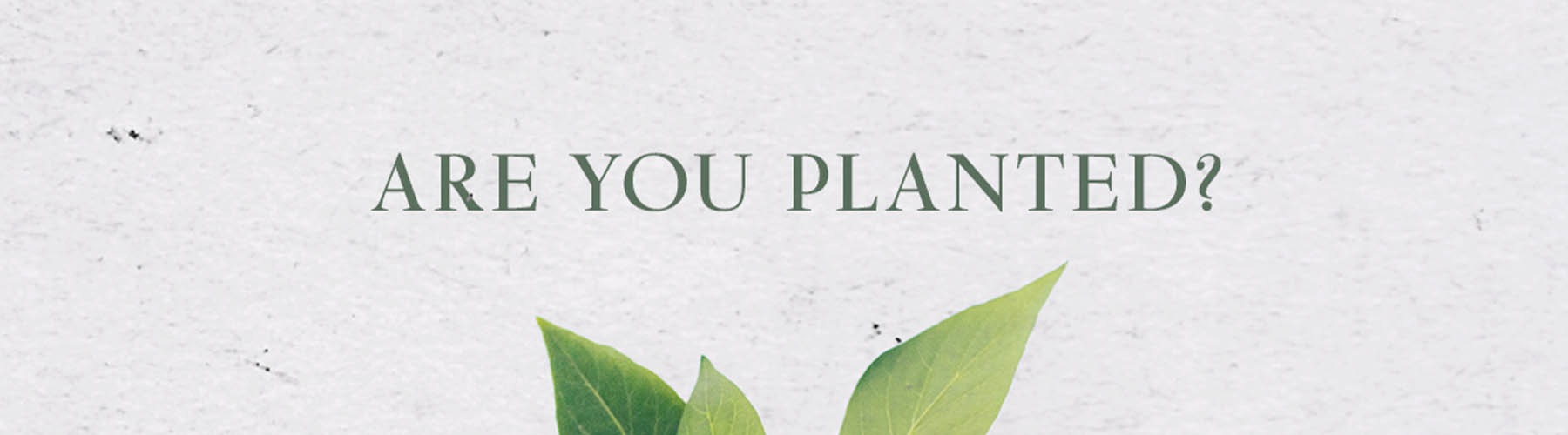 Are You Planted?