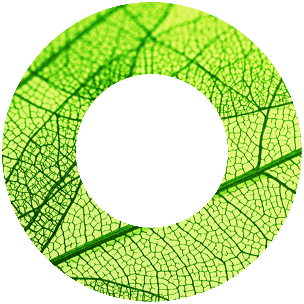 A circle with a close up of a leef structure inside