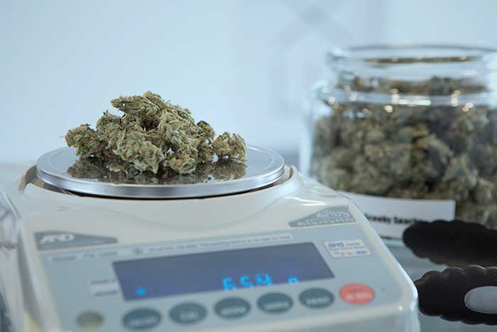 weighing out medical grade bud cannabis flower