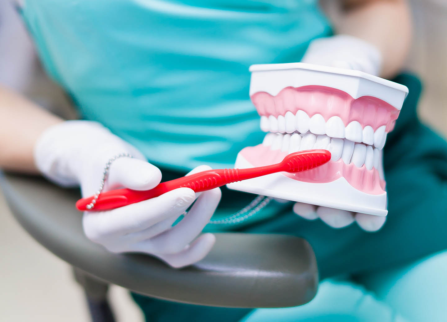 Dentist brushing a model of tooth structure