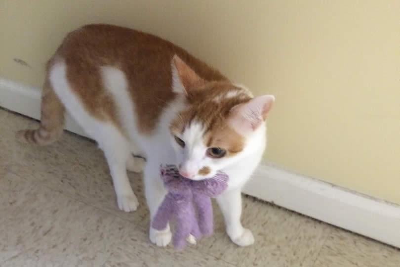 Cat Four
