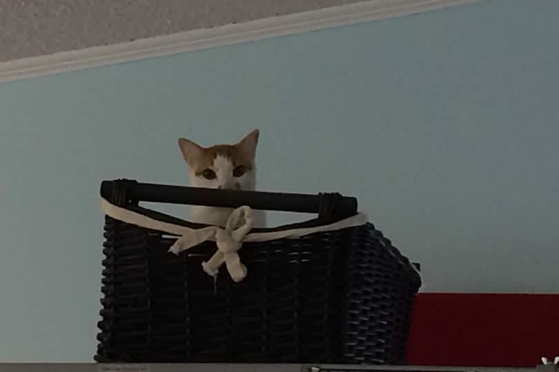 Cat Six