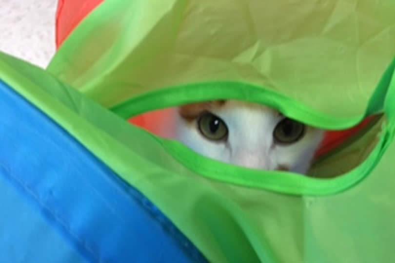 Cat Eight