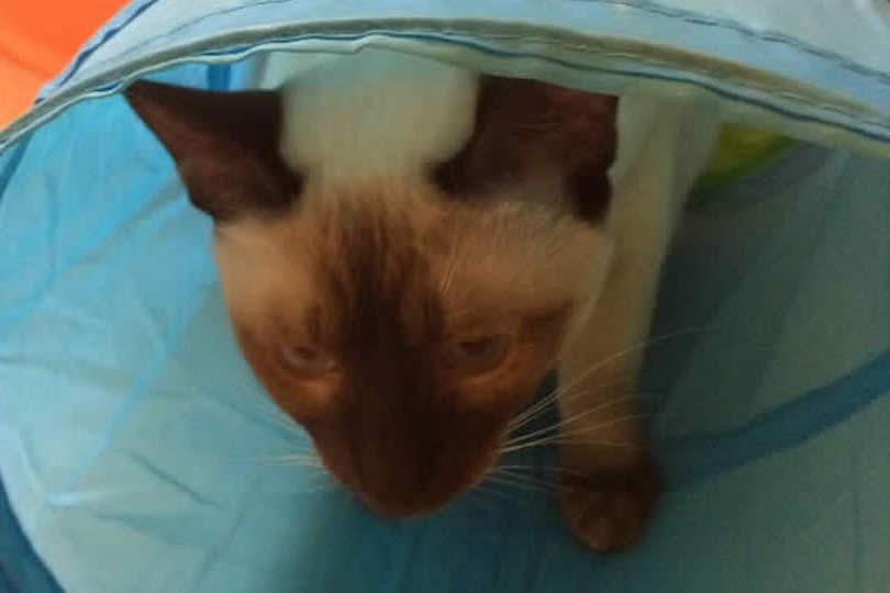 Cat Fourteen