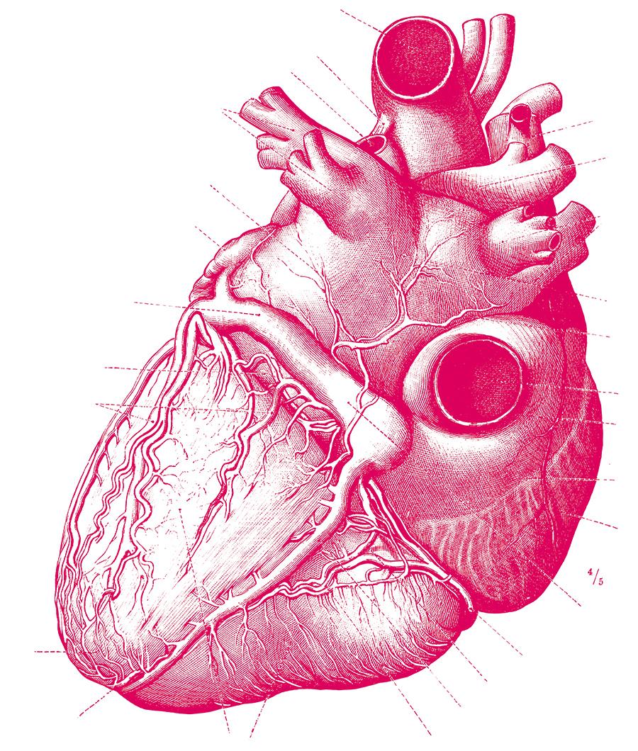 Illustration Herz
