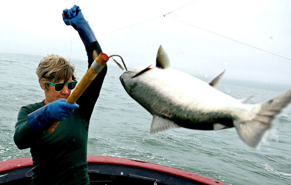 Wild Columbia River King Salmon are admired for their flavor, marbling, texture, and color.