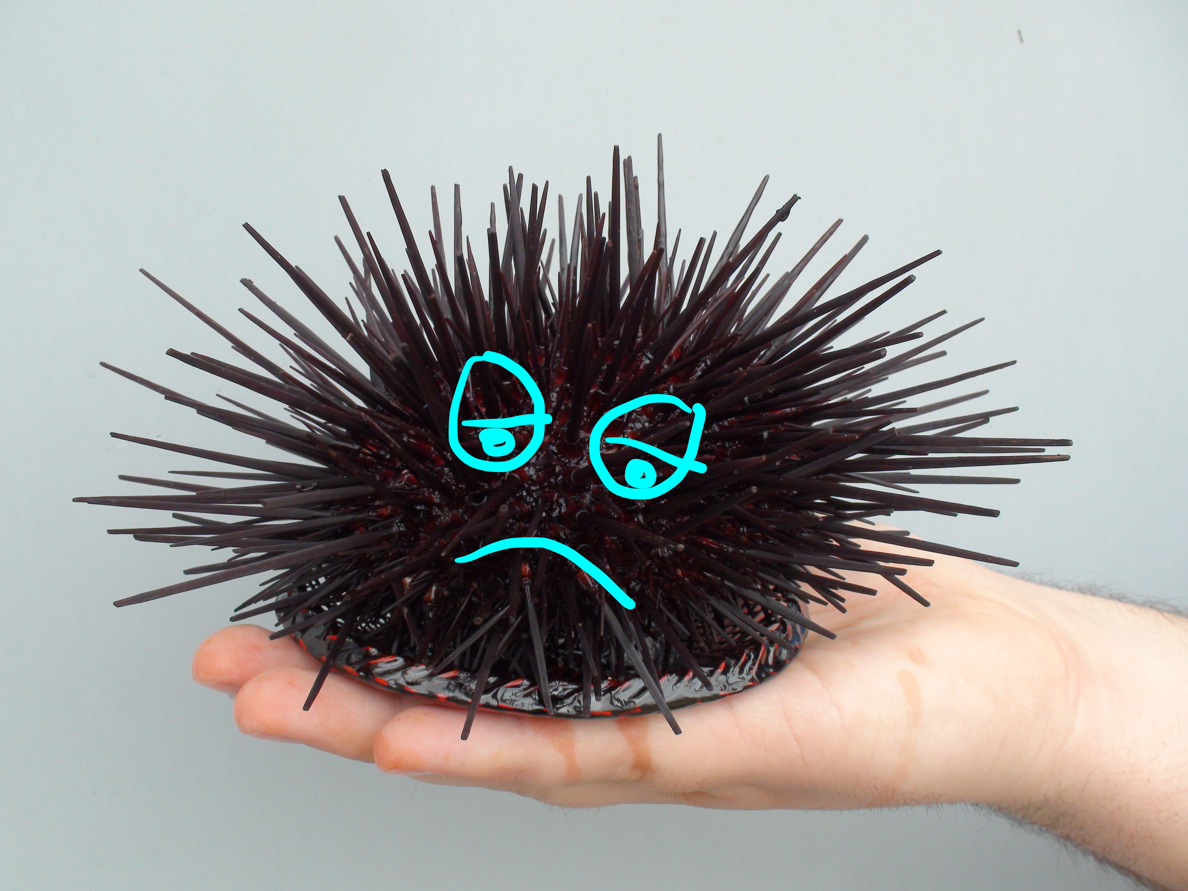 Urchin will not be available for delivery tonight 9/10/19; Divers were unable to go out this weekend due to high swells and low visibility.