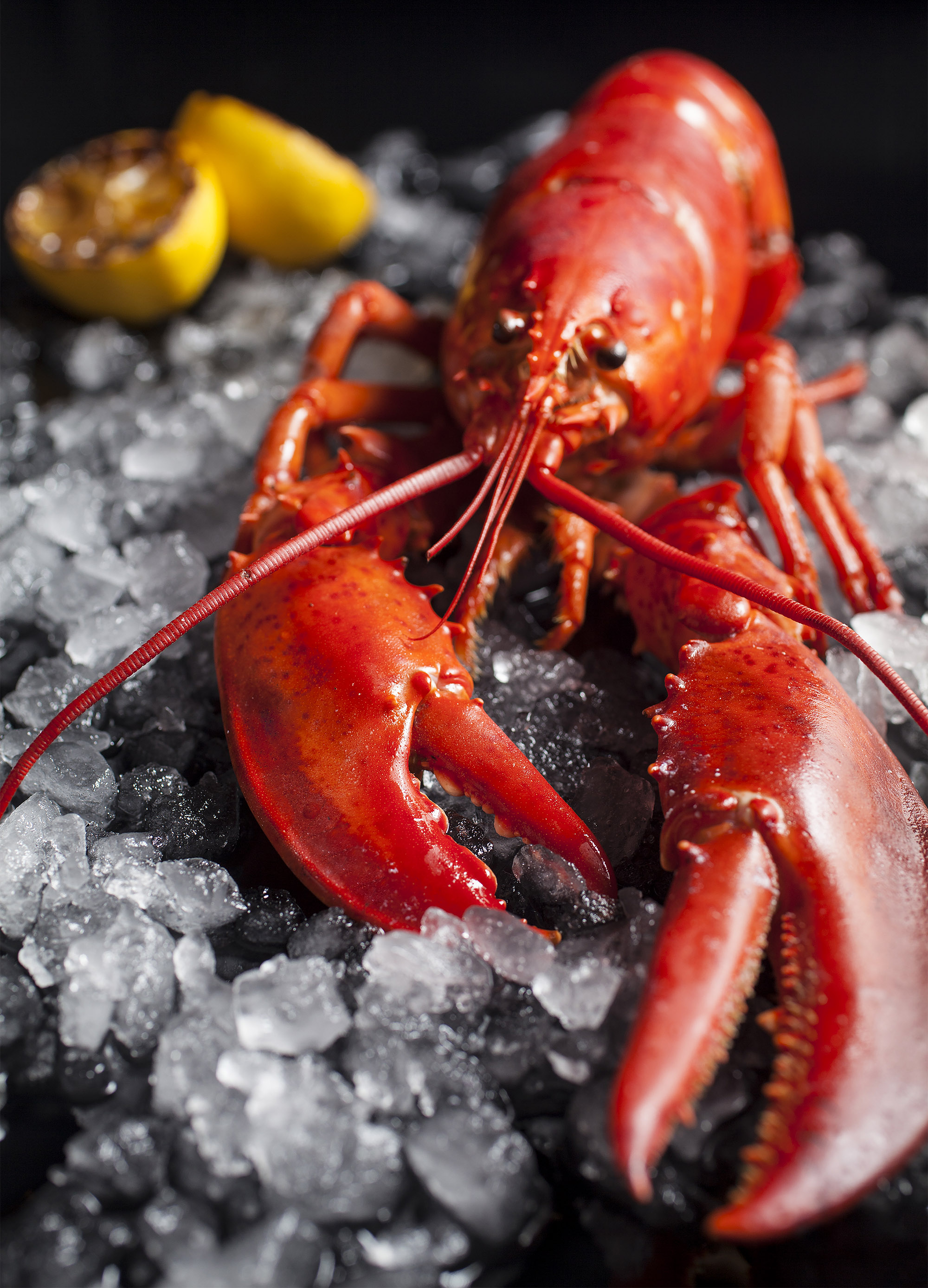 Maine lobsters are really the only clawed lobster that you're going to encounter.