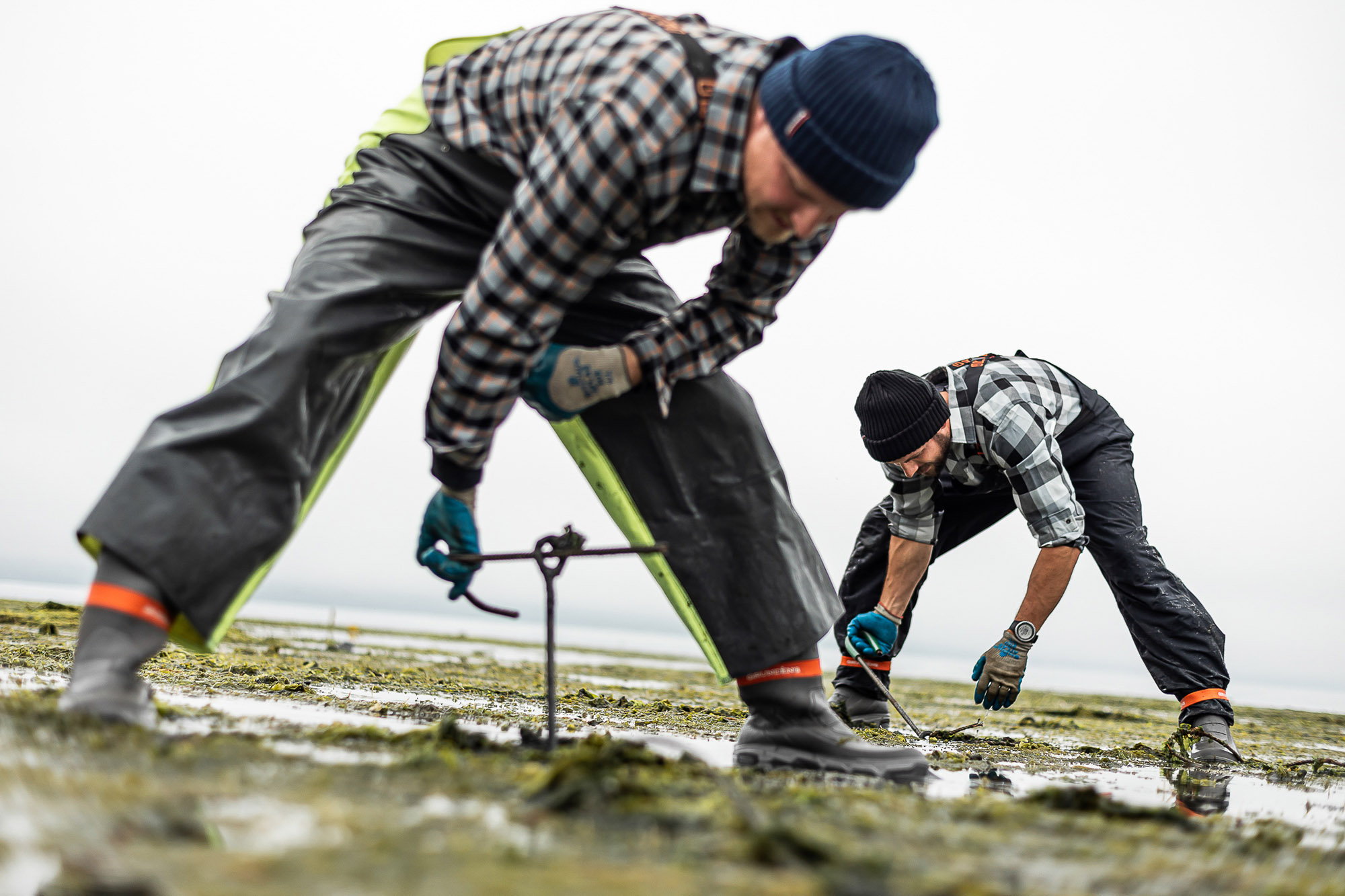 Our Baywater sweet oysters come from second-generation farmers Dylan Gagnes and Caleb Davis, from Baywater Shellfish Company.