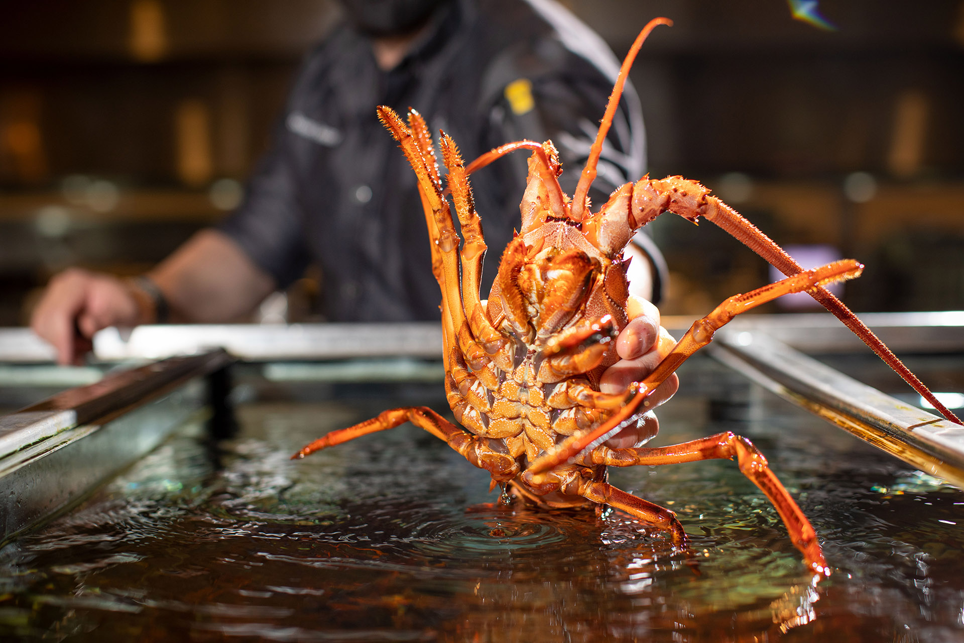 California Spiny Lobsters are back for the season! Available from October –March, these special lobsters are an all-time favorite for seafood lovers.