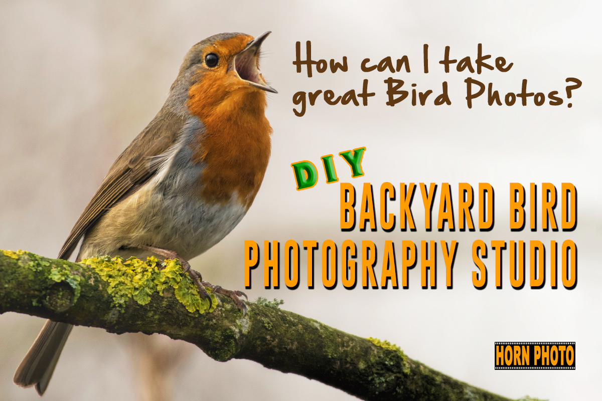 BACKYARD BIRD PHOTOGRAPHY STUDIO