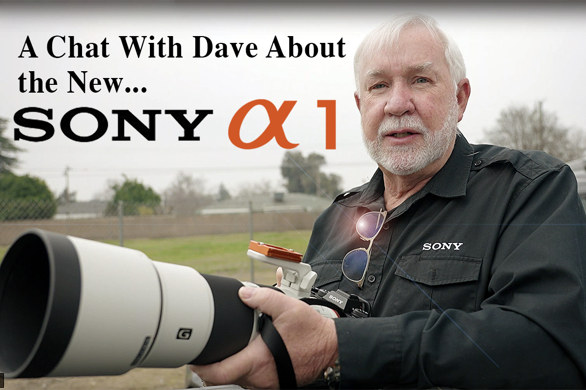 A Chat With Dave About the New Sony a1