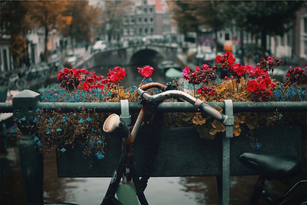 An old bike on an Amsterdam bridge in front of some flowers