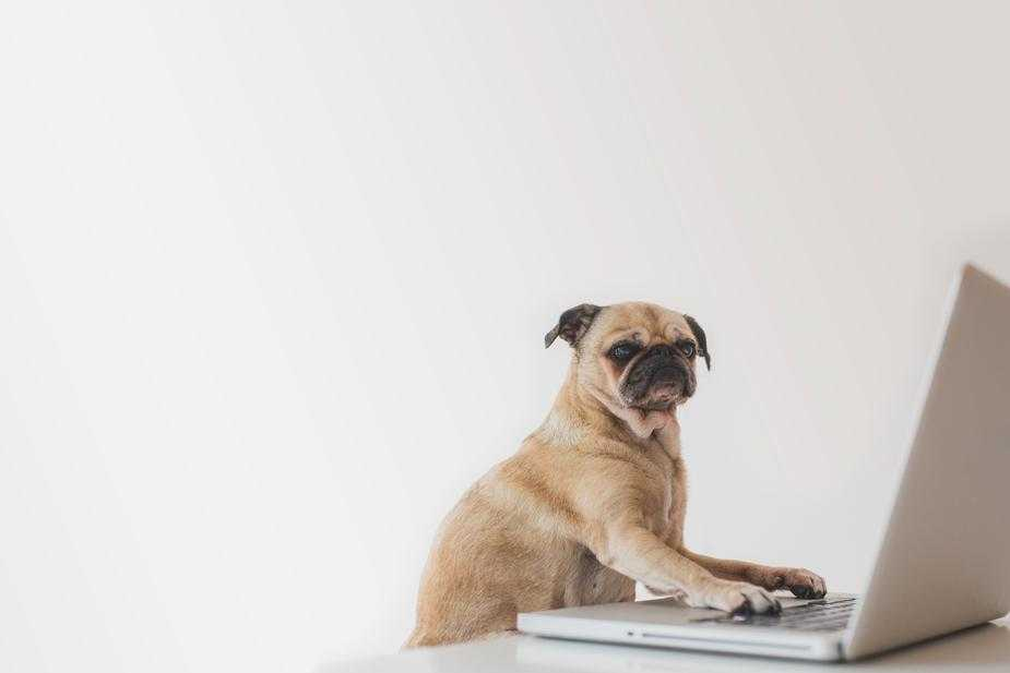 Setting up a pet-friendly office is an amazing way to show employee appreciation!