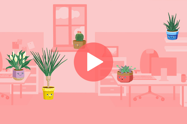 Which Office Plant Is Right For You?