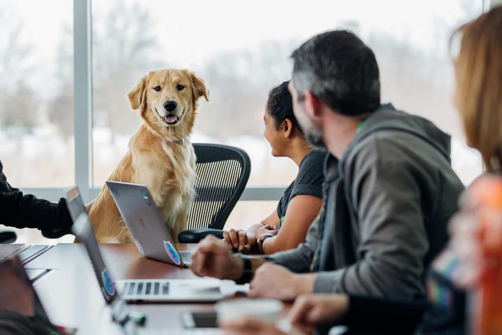 An office dog sitting at the head of a team meeting with a smile on his face