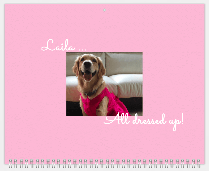 Include Moments that Make You Smile in Your Pet Calendar