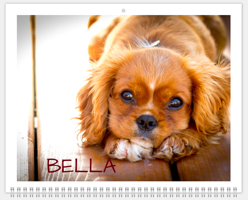 Mimeo Photos Pet Calendar