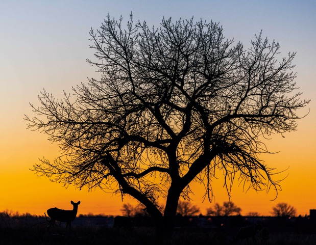 A deer at sunrise Michael Ryno