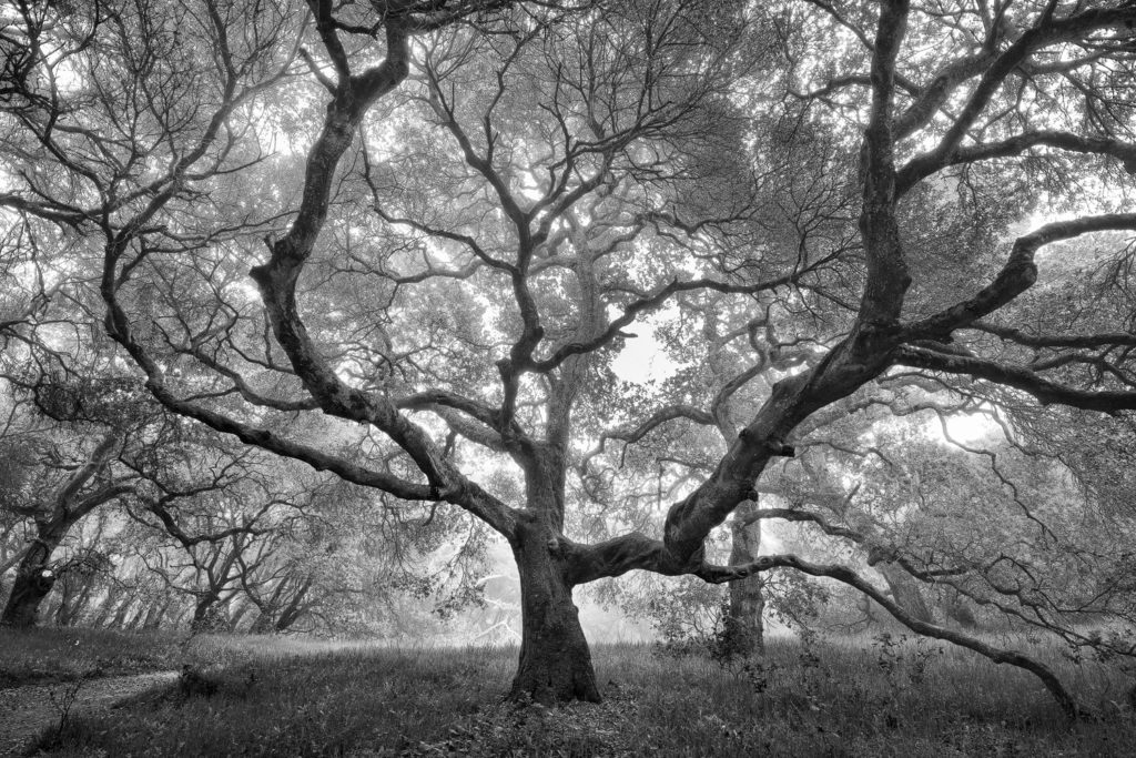 Michael Ryan's photograph of a tree in black and white