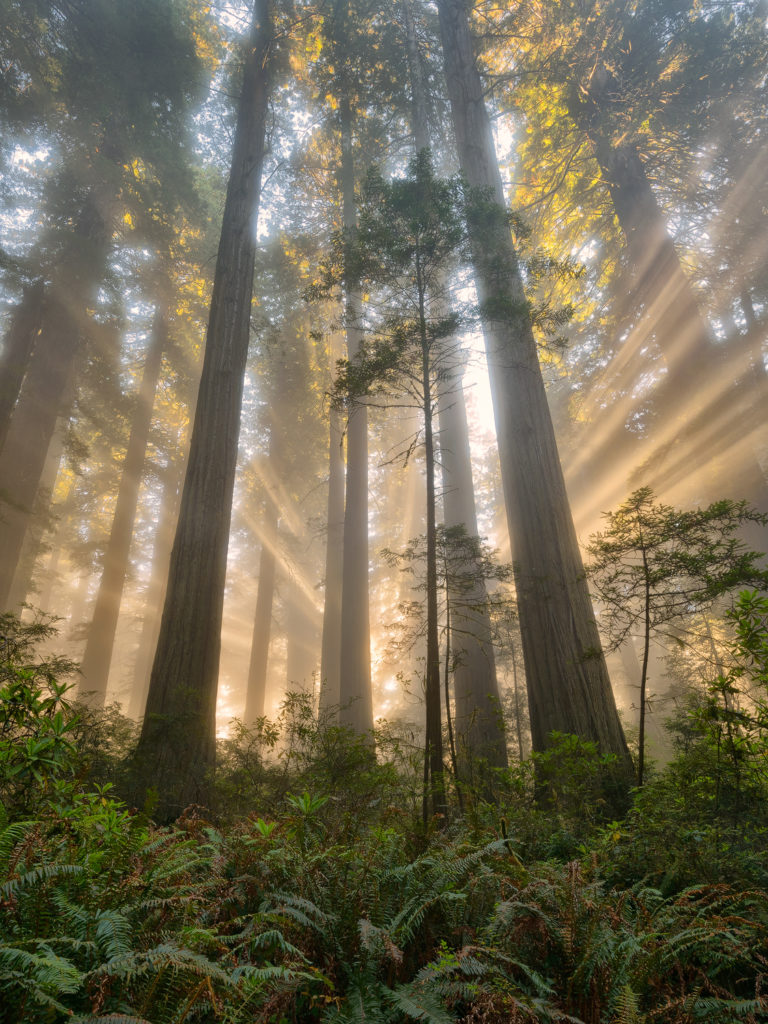 Michael Ryan photograph of a forest