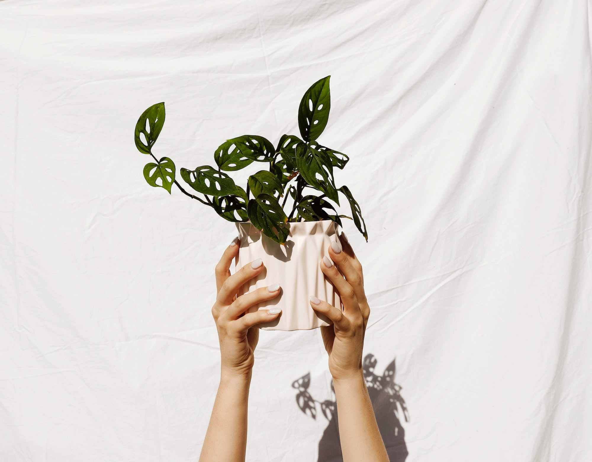 Do something different this Mother's Day by sending her a plant instead of flowers