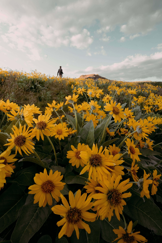 Flowers in a Field by Jordan McGrath