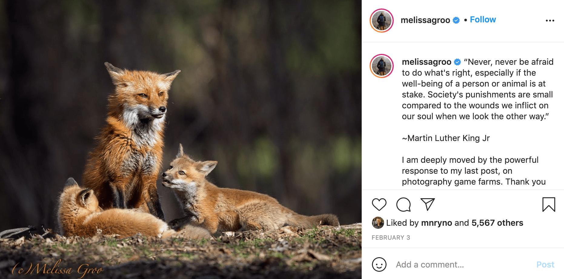 Follow Wildlife Conservation Photographer - Melissa Groo