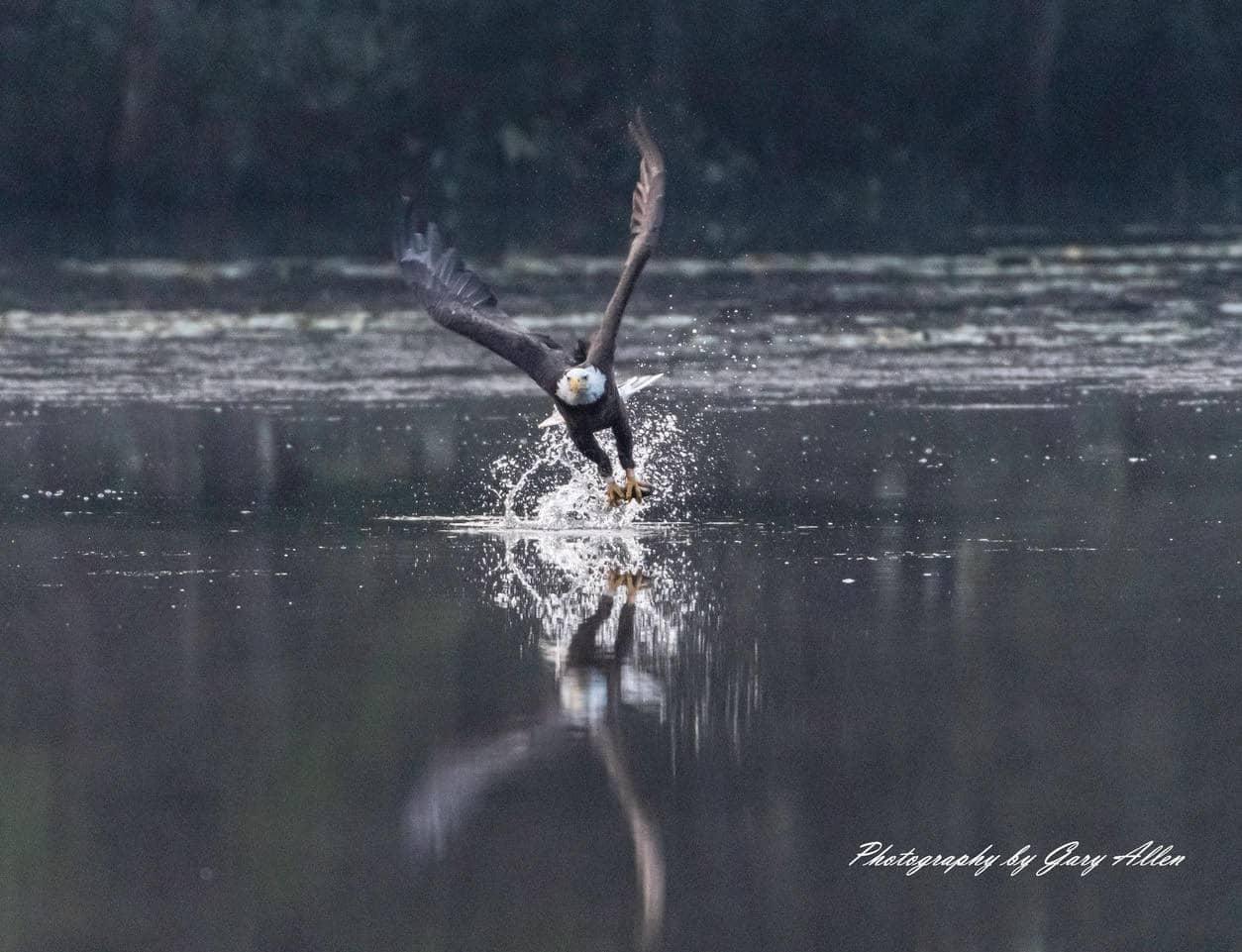 Follow Bird Photographer - Gary Allen