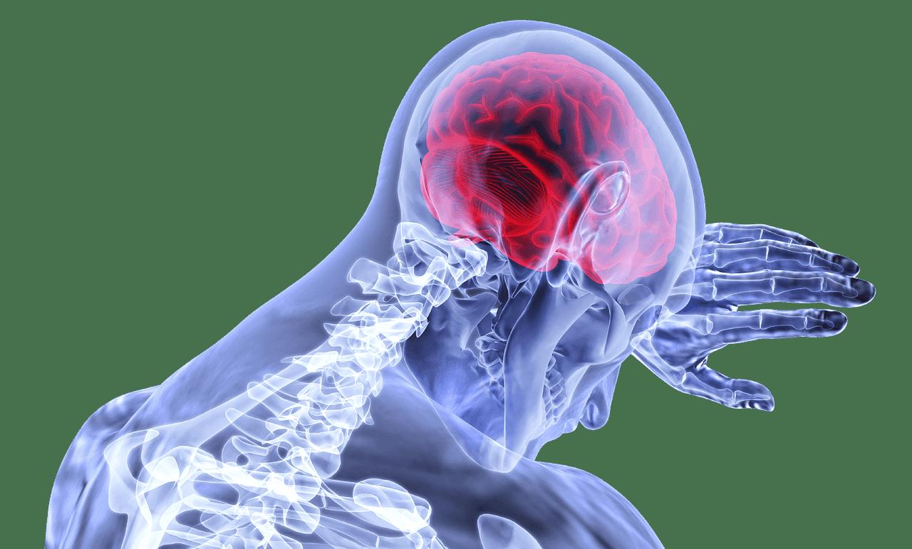 brain x ray blue illustration white background