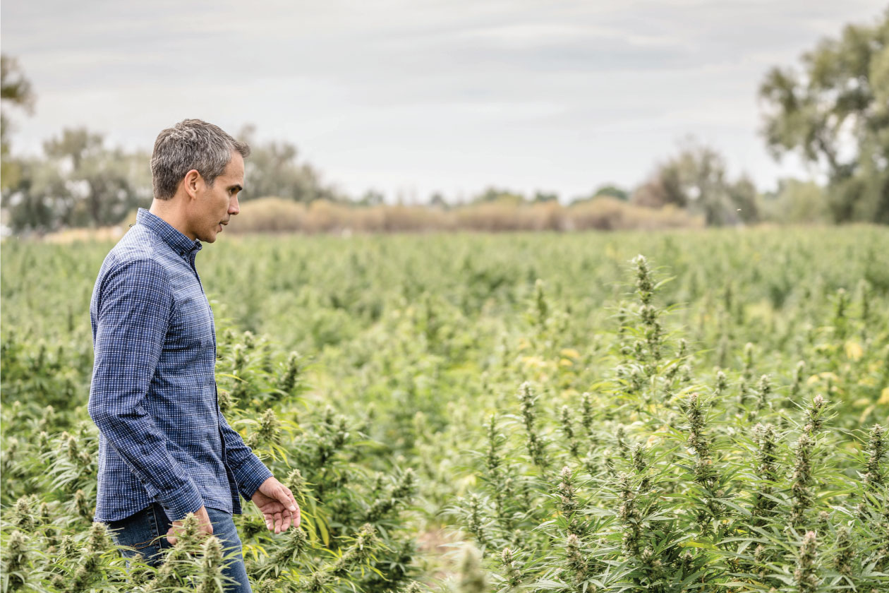 DesignGood Rocwell CBD client in field of hemp plants