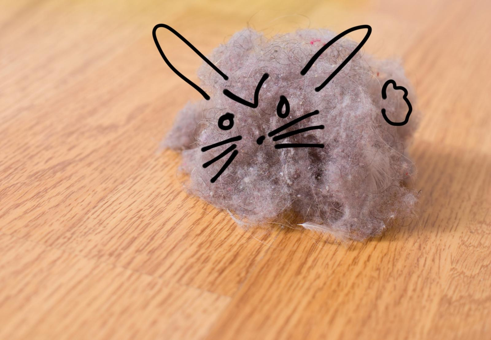 dust-bunny-1