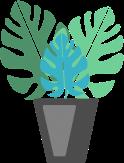 plante_colocation_DIY