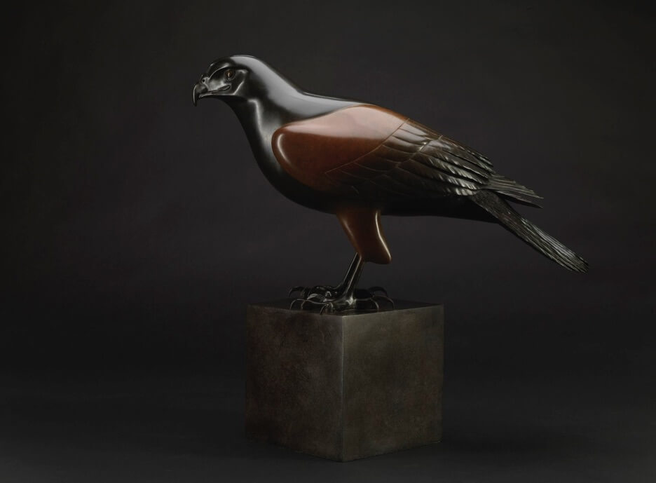 Barry Woodcraft - Harris Hawk