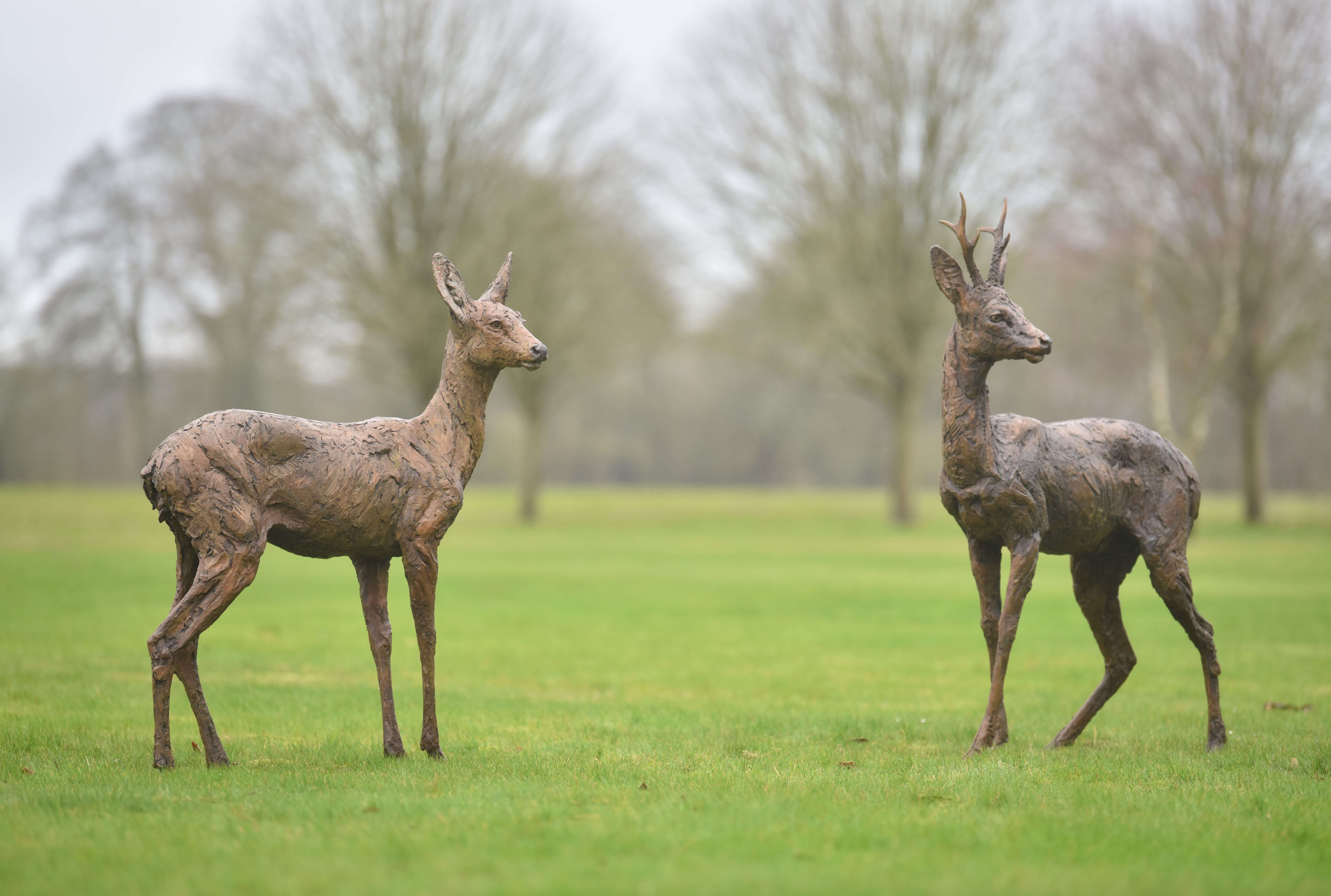 Roe Buck and Doe Standing