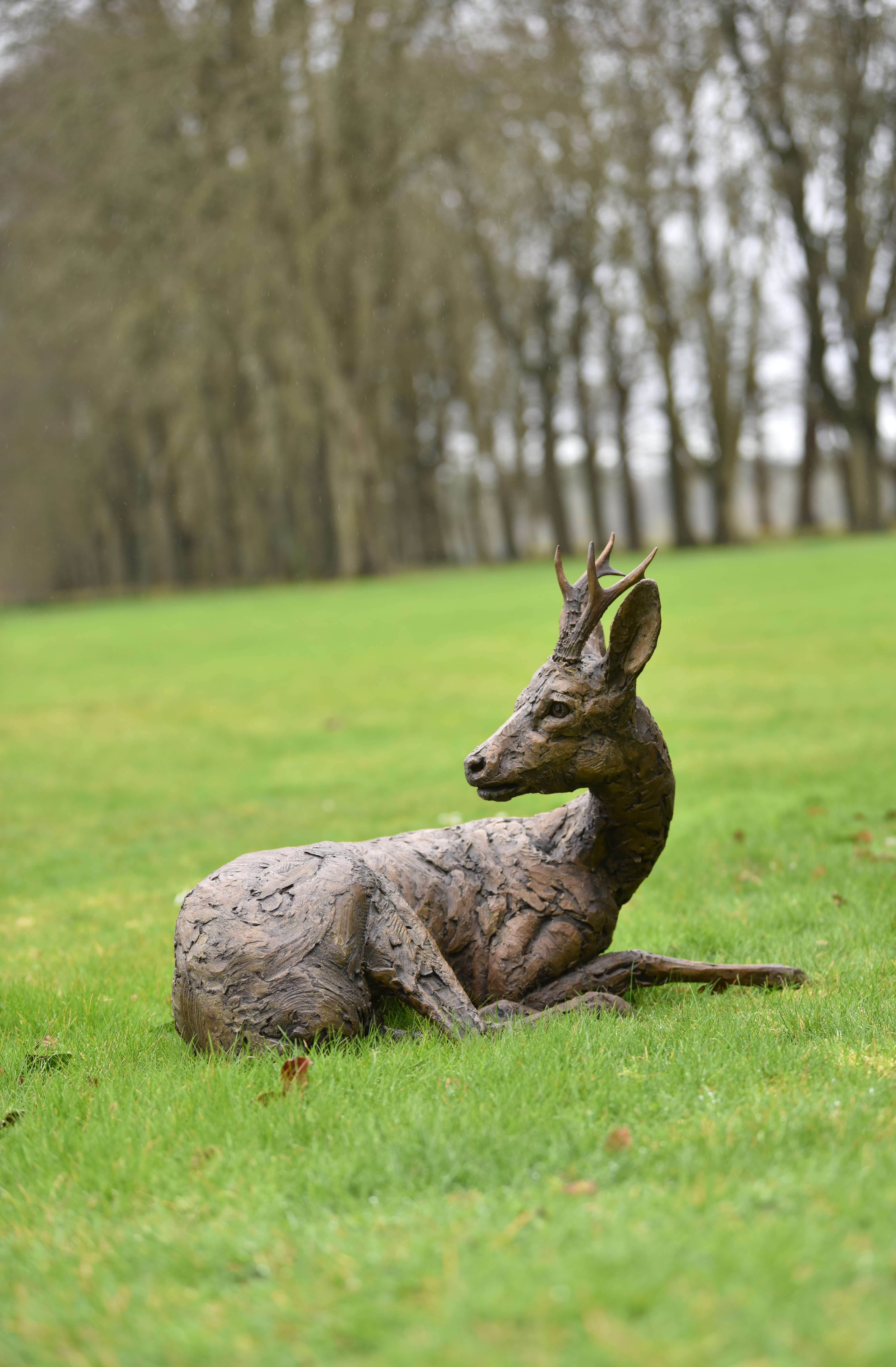 Roe Buck Lying Down Hamish Mackie at Muse. The Sculpture Company
