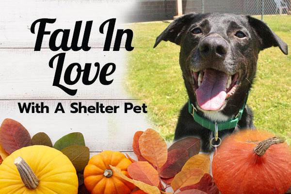 Fall in Love... Adopt