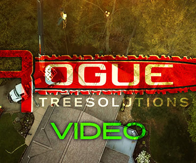 Video Production for Rogue Tree Solutions by Snyder Advertising