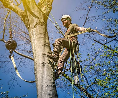 Professional Photography for Rogue Tree Solutions